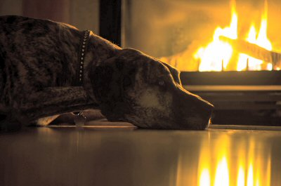 Protect Your pets From Home Accidents and Fires